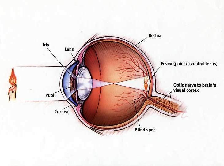 Barch File Eye Diagram